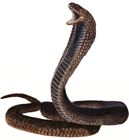 picture of a king cobra to color