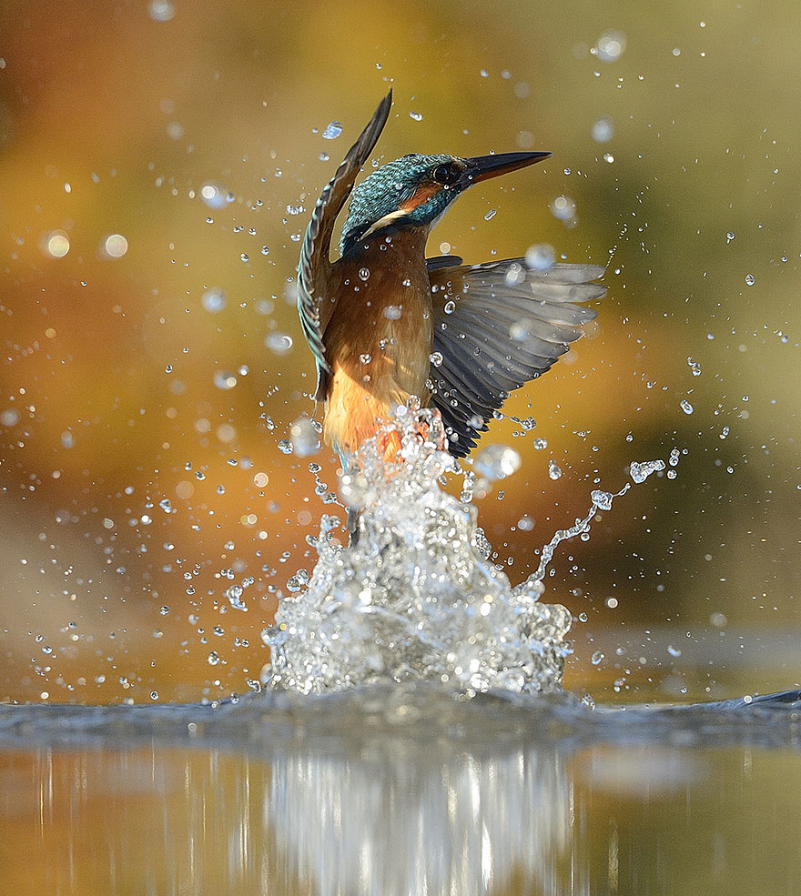 kingfisher photo 6 years