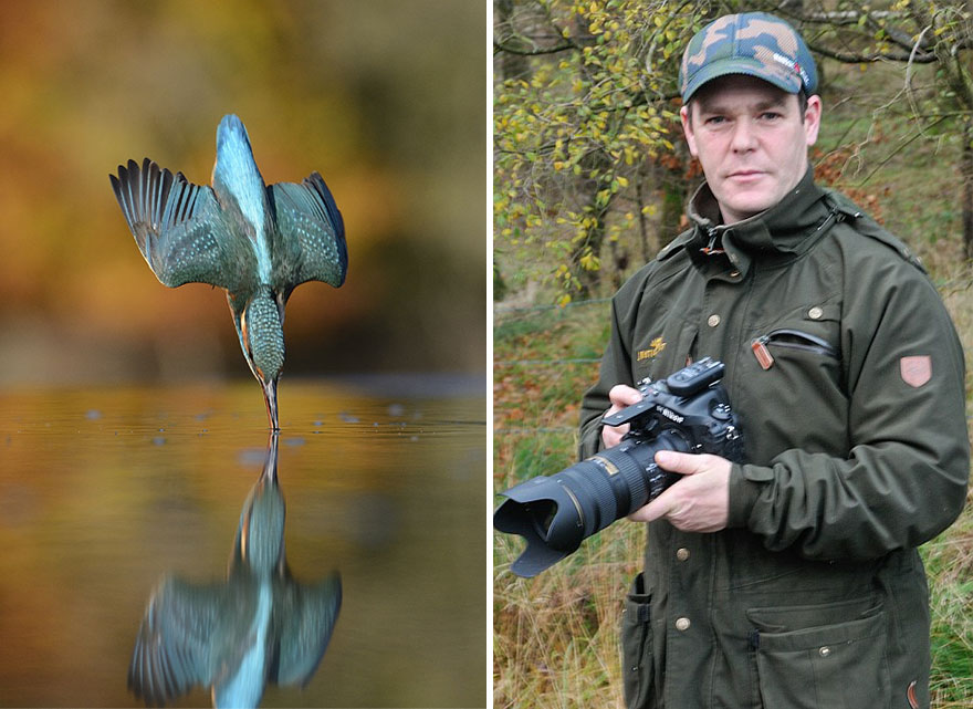 kingfisher photo of the year
