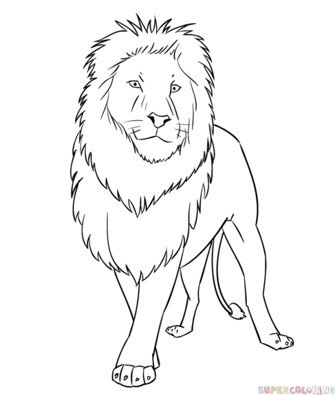 photo of lion for drawing
