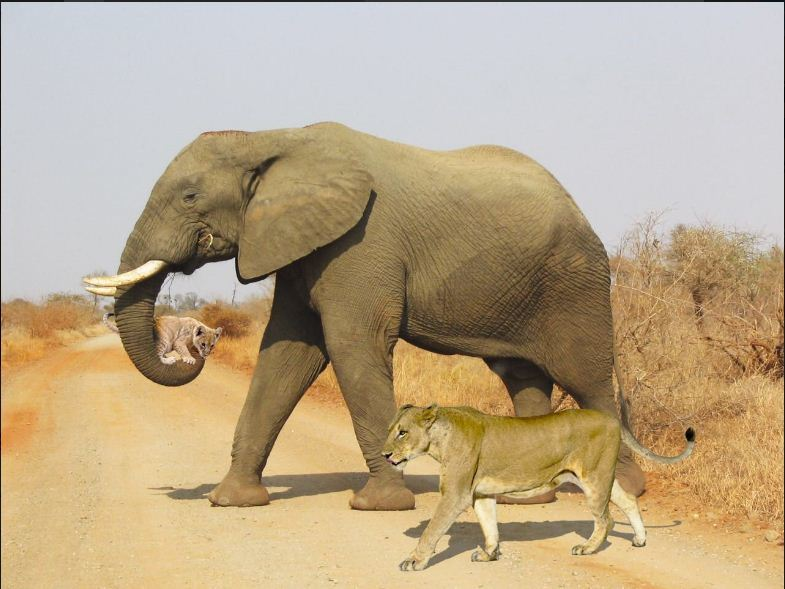 photo of lioness cub and elephant