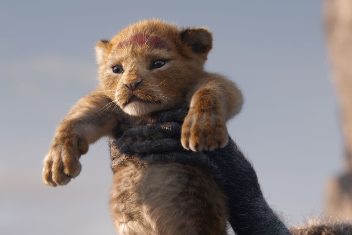 photo of simba the lion king
